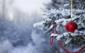 winter woods- christmas